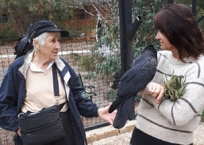 Karrakin Work and Red Tail Black Cockatoo